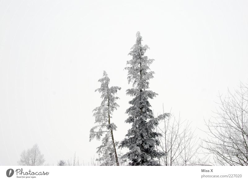 winter forest Winter Bad weather Fog Ice Frost Snow Tree Forest Cold Gray White Fir tree Black & white photo Exterior shot Deserted Copy Space top Dawn Treetop