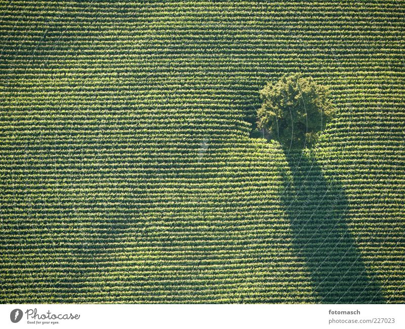 Nature Beautiful Tree Plant Summer Landscape Line Contentment Field Level Beautiful weather Copy Space Aerial photograph Direct Weather Bird's-eye view