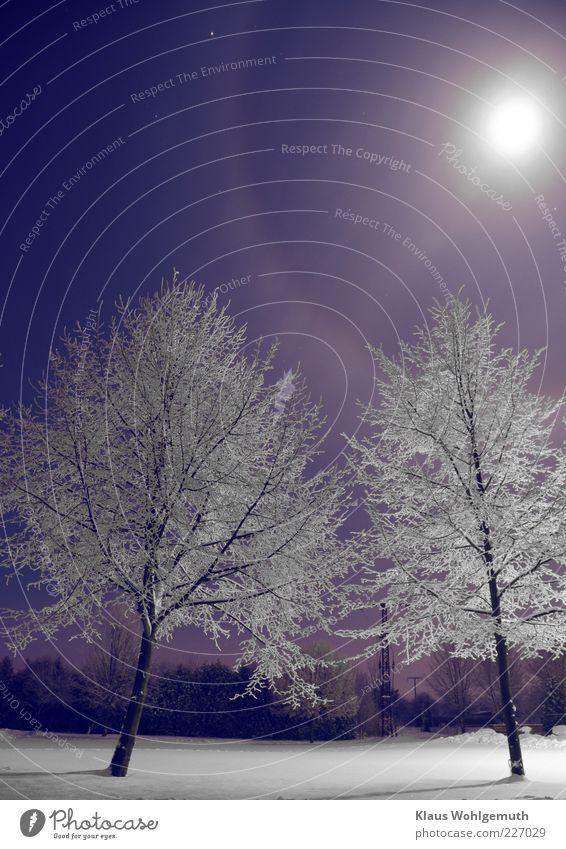 Blue White Tree Winter Cold Snow Stars Frost Illuminate Moon Silver Night sky Haze Bleak Ice crystal Hoar frost