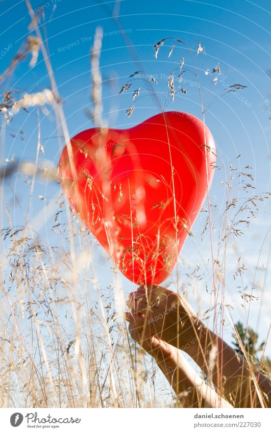 Barbara, look !! Arm Hand 1 Human being Beautiful weather Grass Balloon Heart Blue Red Emotions Moody Joy Happy Happiness Joie de vivre (Vitality) Sympathy
