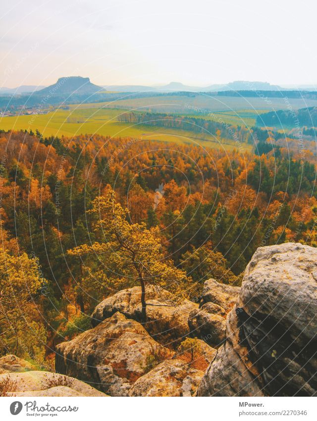 saxony Environment Nature Landscape Beautiful weather Plant Tree Field Forest Hill Mountain Relaxation Autumn Saxon Switzerland Vantage point Hiking