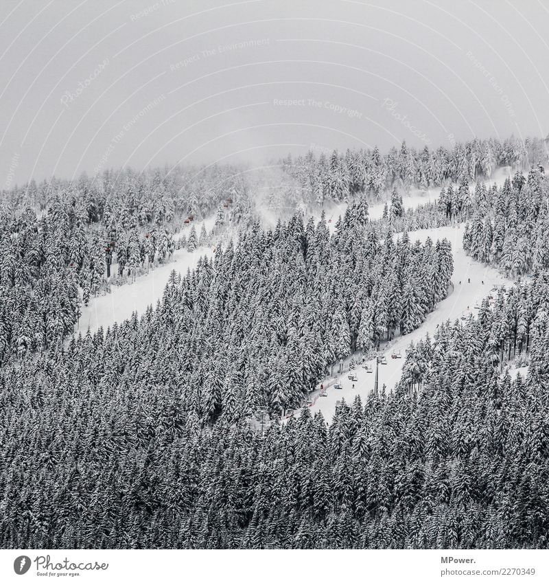 skiing area Environment Clouds Winter Bad weather Fog Snow Forest Mountain Cold Winter vacation Winter mood Ski resort Ski lift Ski run Colour photo