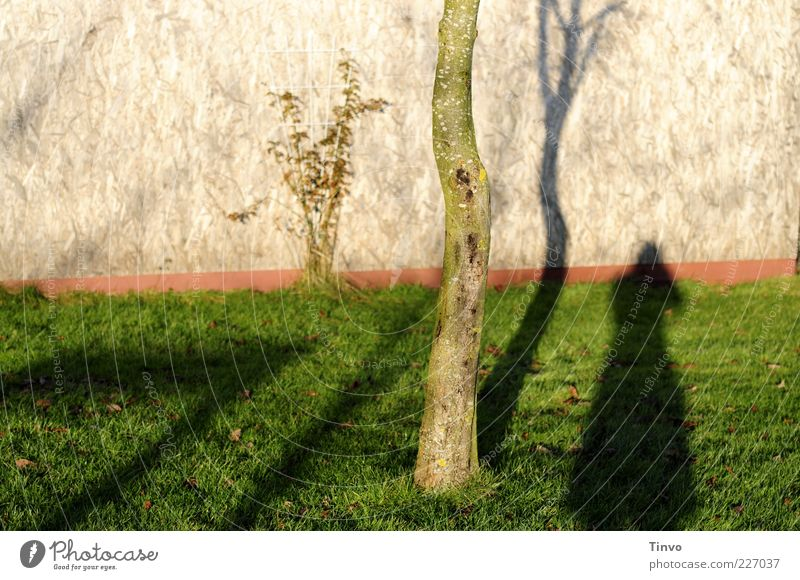 Woman Nature Tree Loneliness Meadow Wall (building) Environment Grass Wall (barrier) Sadness Disappointment