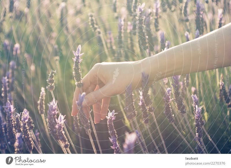 Picking lavenders Woman Nature Plant Beautiful Hand Relaxation Calm Adults Meadow Health care Contentment Skin Wellness Well-being Harmonious Medication