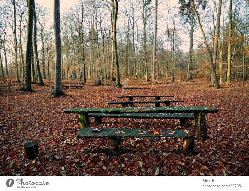 Invitation to a picnic Environment Nature Landscape Autumn Tree Forest Cold Loneliness Picnic Wooden bench Autumn leaves Leaf Colour photo Exterior shot