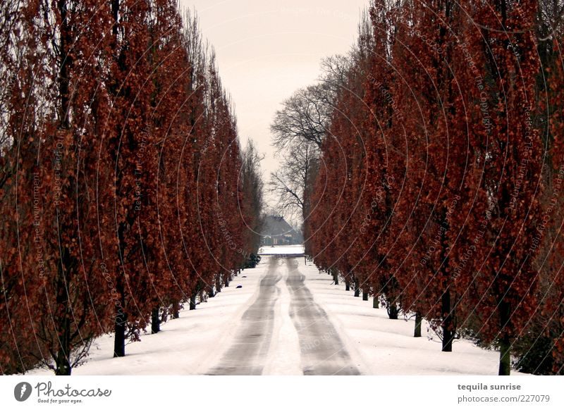 Winter poplar avenue Environment Nature Plant Autumn Climate Bad weather Ice Frost Snow Tree Poplar Park Street Lanes & trails Avenue Moody Sadness Grief