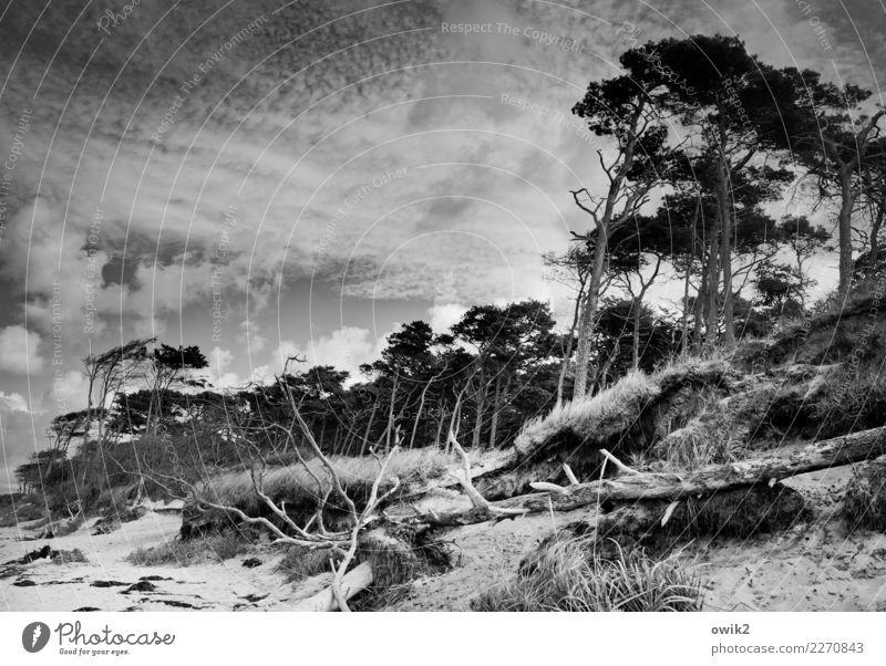 Sky Nature Plant Landscape Tree Clouds Beach Environment Coast Wood Grass Wild Idyll Wind Bushes Beautiful weather