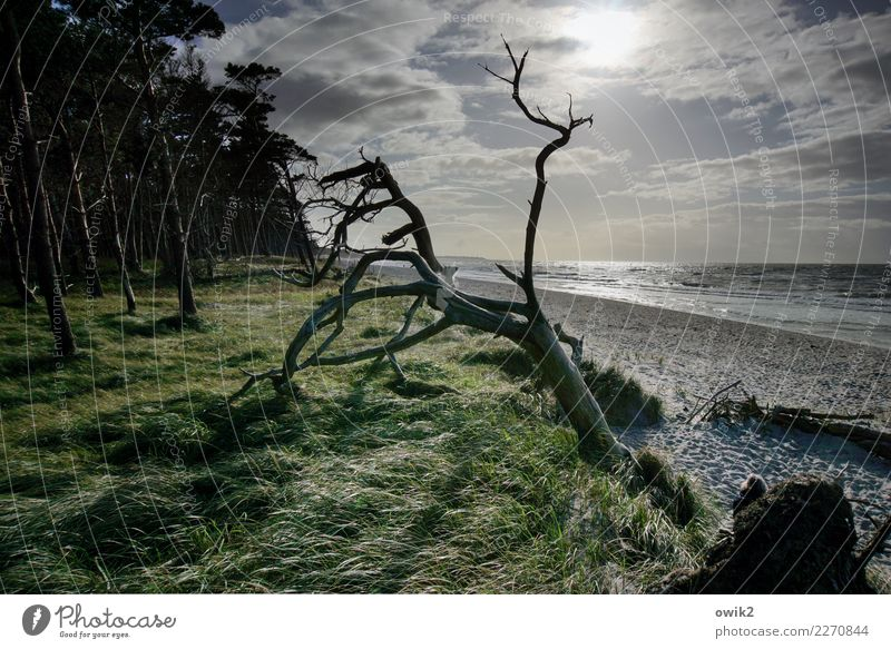 cry for help Environment Nature Landscape Plant Elements Air Water Sky Clouds Horizon Beautiful weather Wind Tree Grass Bushes Wind cripple Forest Coast