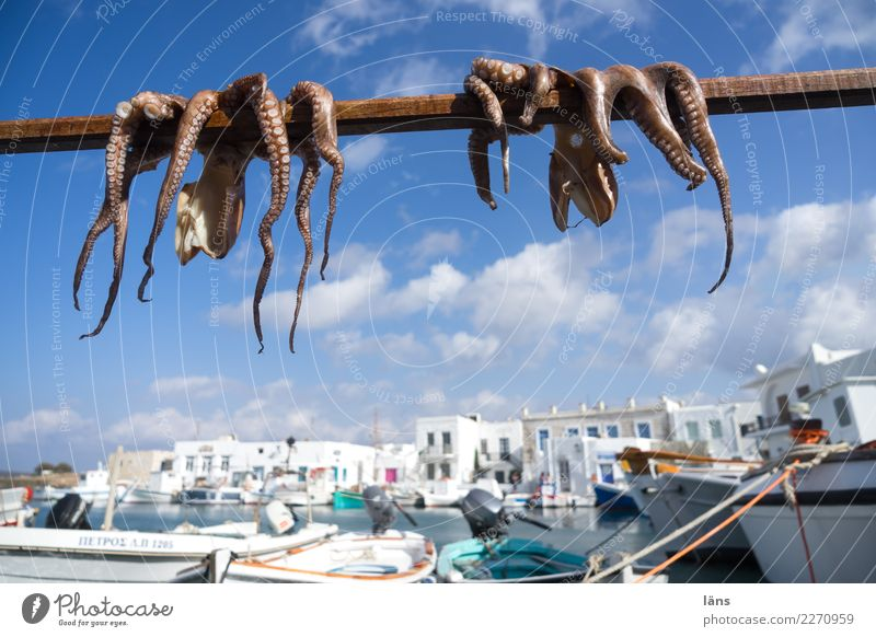 air drying Seafood Nutrition Sky Clouds Beautiful weather Coast Town Port City Harbour Building Fishing boat Wild animal Squid Octopods 2 Animal Simple