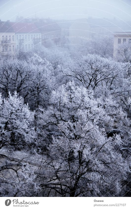 ice fog Fog Weather Cold Hoar frost Ice Snow White Tree Branch Treetop Town Friedrichshain Skyline Building House (Residential Structure) Winter Blue Gray Dark