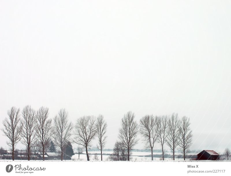 White Tree Winter Clouds Loneliness Cold Snow Landscape Ice Fog Frost Gloomy Village Agriculture Farm Hut