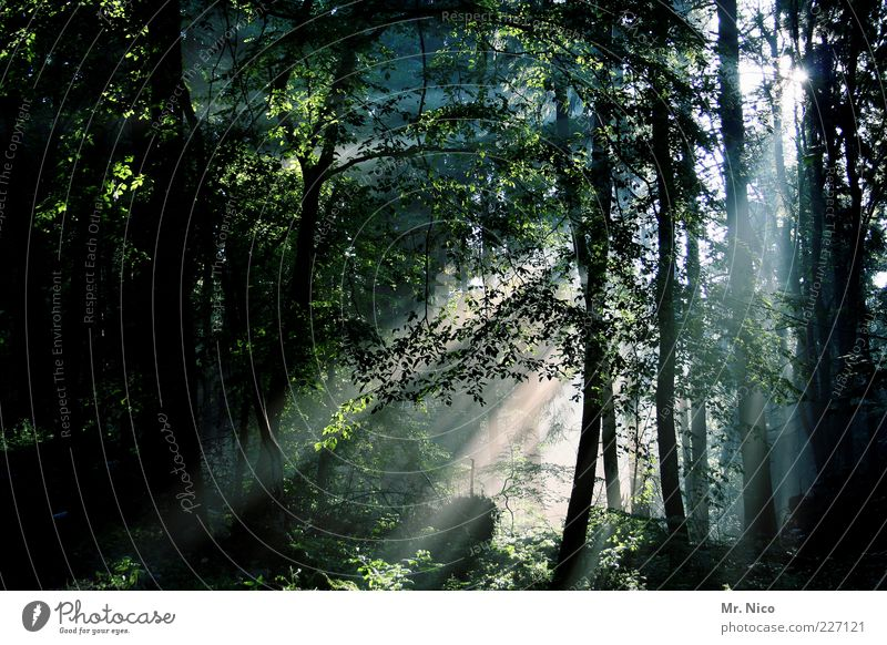 way of light Environment Nature Summer Climate Tree Forest Mixed forest Deciduous forest Enchanted forest Wood Mystic Peaceful Calm Mysterious Undergrowth