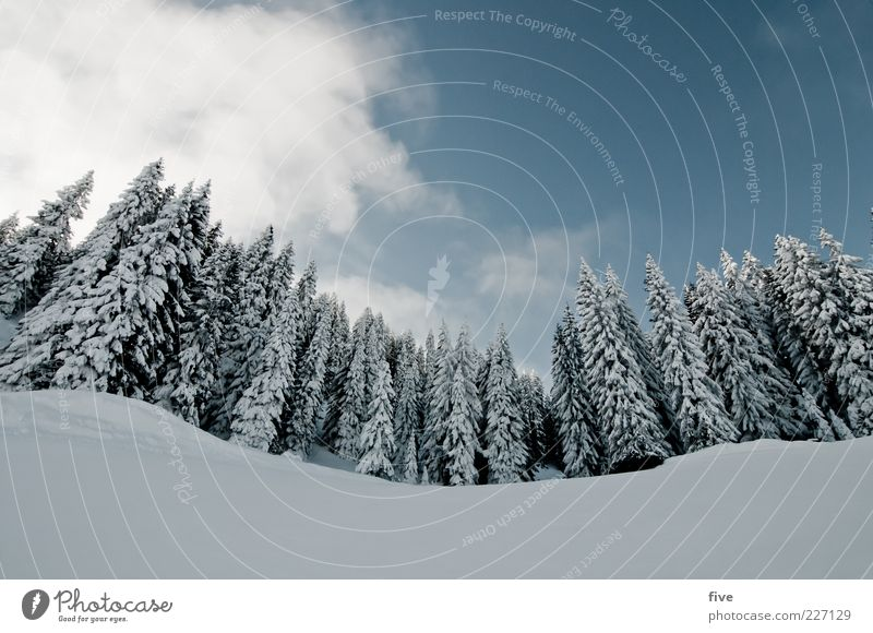 two three little trees Ski run Nature Landscape Sky Clouds Winter Weather Beautiful weather Ice Frost Snow Plant Tree Forest Hill Alps Mountain Cold Ski resort