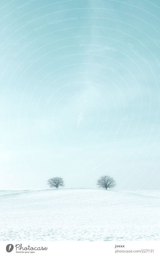 Sky Blue White Tree Calm Far-off places Cold Snow Environment Landscape Park Field Ice Together Horizon In pairs