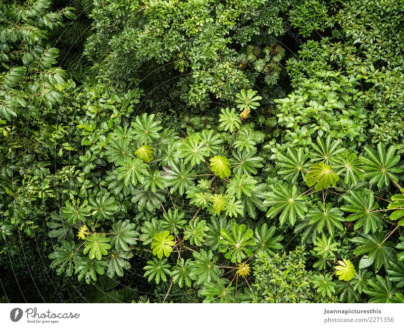 treetops Harmonious Calm Environment Nature Plant Summer Tree Bushes Leaf Foliage plant Wild plant Exotic Forest Virgin forest Growth Sustainability Wet Natural