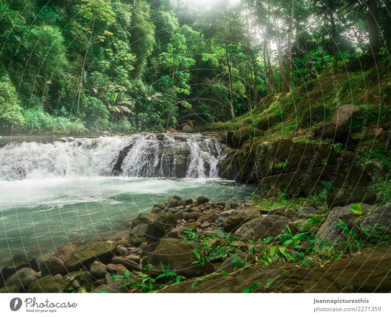 Tropical Exotic Trip Adventure Freedom Nature Landscape Plant Elements Water Tree Moss Leaf Foliage plant Wild plant Virgin forest Rock River bank Waterfall