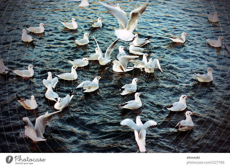 place there! Animal Water Wild animal Bird Seagull Group of animals Flying Feeding To feed Colour photo Exterior shot Bird's-eye view Float in the water