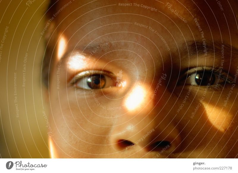 ray of hope Well-being Contentment Human being Masculine Boy (child) Infancy Youth (Young adults) Face Eyes Nose 1 8 - 13 years Child Observe Glittering Looking