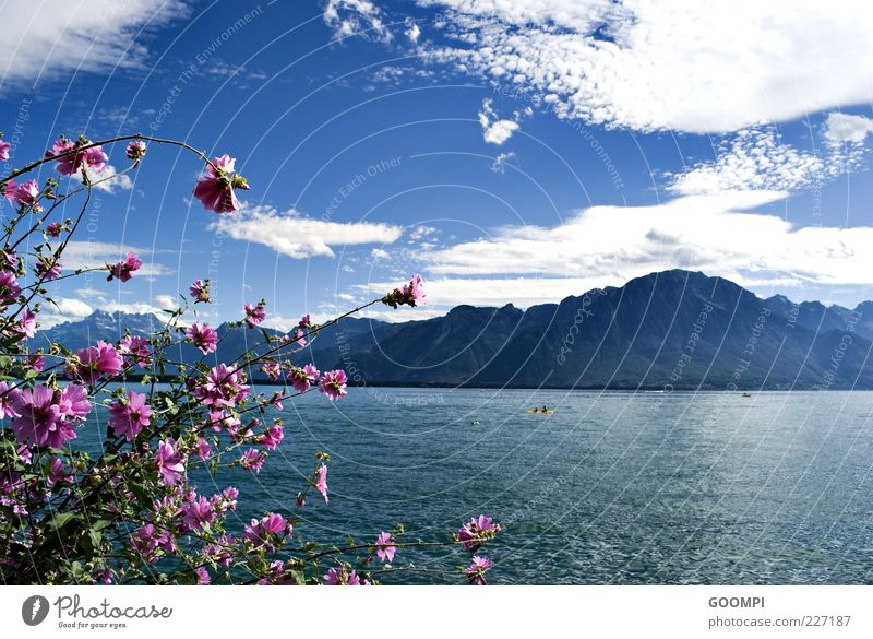 Sky Nature Water Blue Plant Sun Summer Flower Clouds Far-off places Relaxation Mountain Blossom Lake Contentment Pink