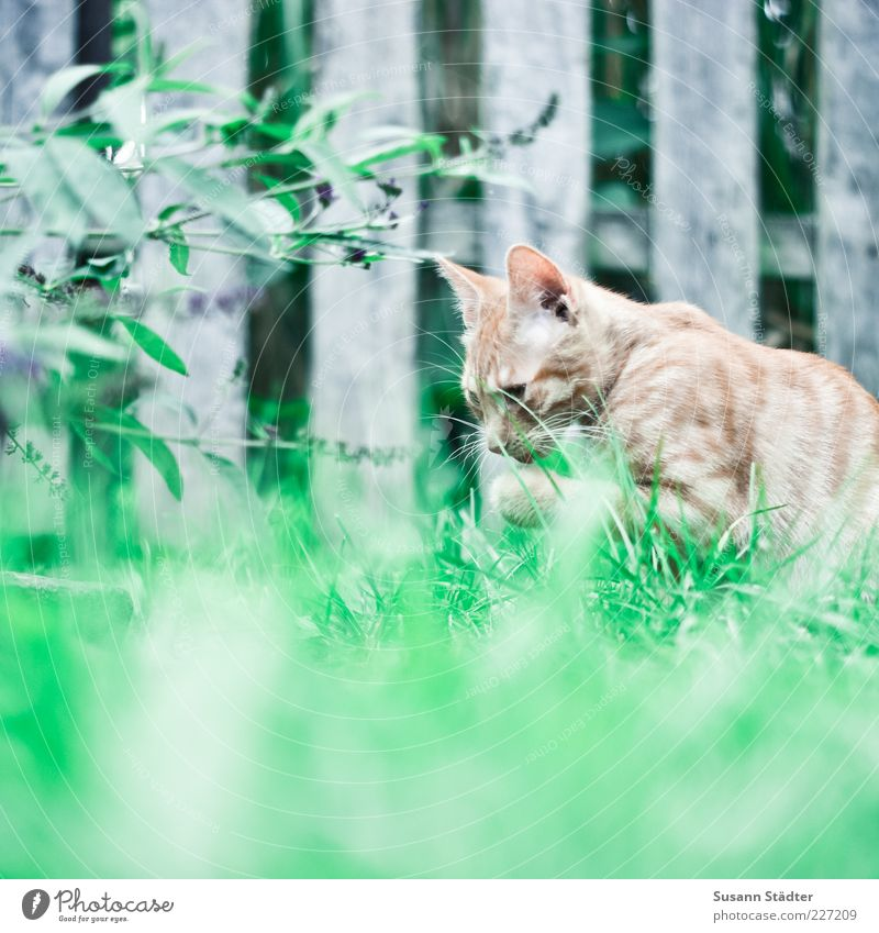 Red Animal Relaxation Meadow Grass Cat Cute Cleaning Touch Pelt Discover Fence Pet Lick Kitten Free-living