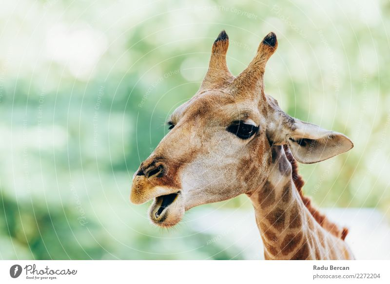 Wild African Giraffe Portrait Nature Vacation & Travel Summer Colour Green White Animal Funny Brown Orange Wild animal Cute Observe Long