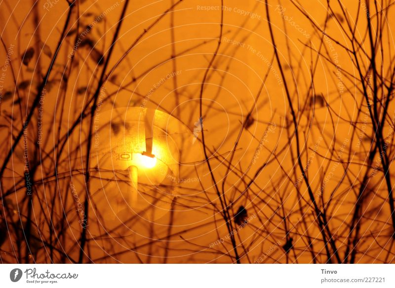 Orange Lighting Gold Bushes Exceptional Illuminate Street lighting Twigs and branches Night Exterior lighting