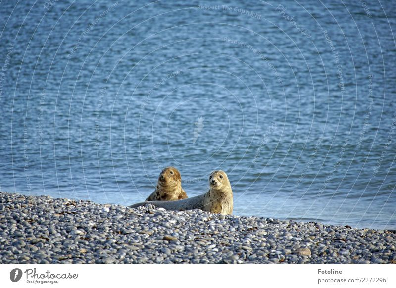 Nature Water Landscape Ocean Animal Winter Beach Environment Natural Coast Gray Brown Bright Pair of animals Earth Wild animal