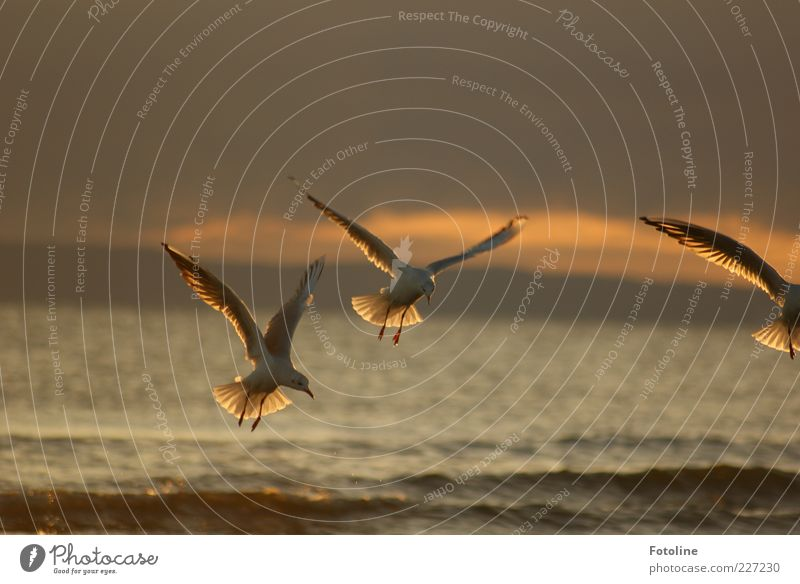 On to Spiekerook Environment Nature Animal Sky Clouds Summer Waves Baltic Sea Ocean Wild animal Bird Wing Dark Natural Brown Seagull Flying Colour photo
