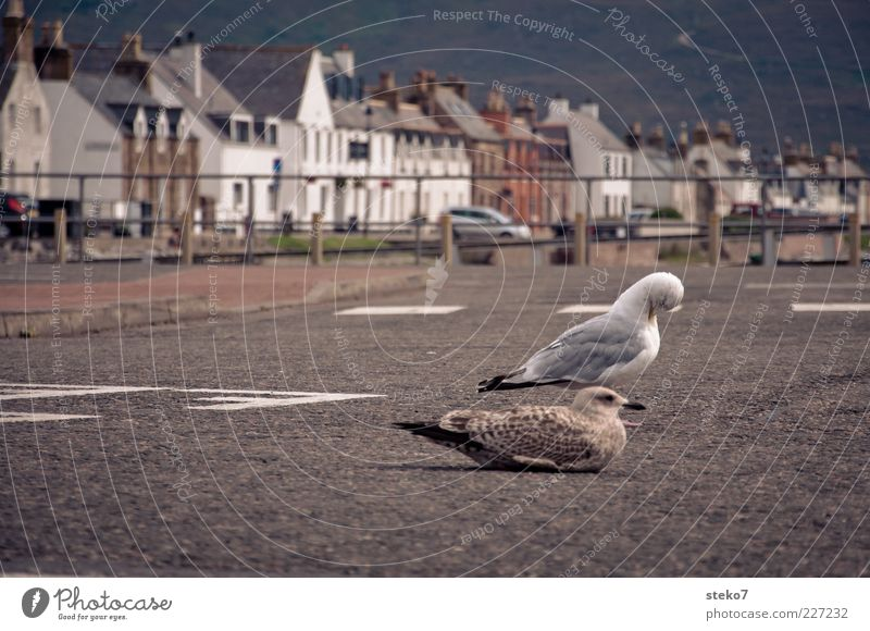 Highnoon in Ullapool ulllapool Scotland Port City House (Residential Structure) Street Seagull 2 Animal Relaxation Break Contemplative Exterior shot Asphalt Sit