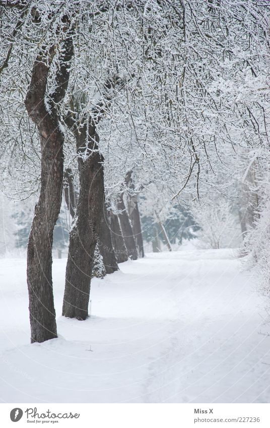 orchard Nature Winter Ice Frost Snow Tree Park Cold White Hoar frost Row Avenue Colour photo Exterior shot Deserted Morning Garden path Row of trees Winter mood