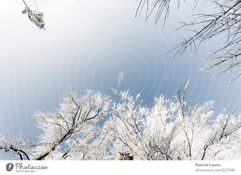 White-Blue Environment Nature Plant Elements Air Sky Cloudless sky Winter Weather Beautiful weather Snow Tree Fresh Tall Cold Natural Positive Above