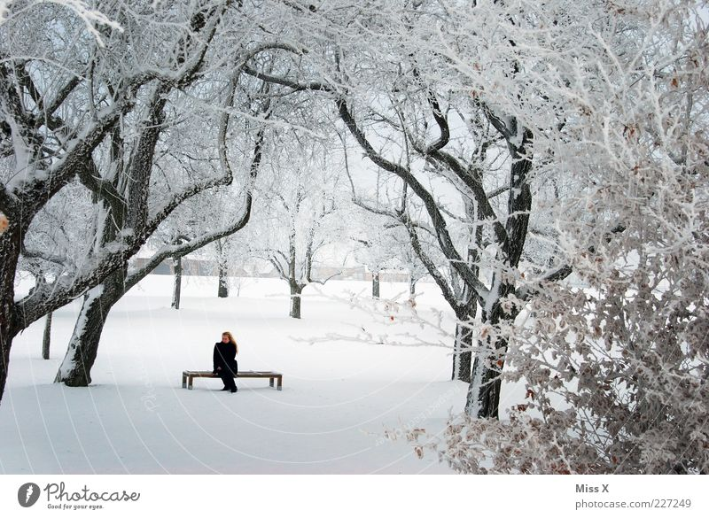 Hidden Calm Winter Woman Adults 1 Human being Nature Ice Frost Snow Tree Park Sit White Bench Wait Park bench Branch Hoar frost Colour photo Exterior shot Day