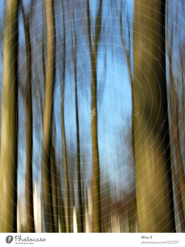 pan Nature Tree Forest Blue Brown Tree trunk Motion blur Movement Dynamics Colour photo Exterior shot Pattern Deserted Blur Day