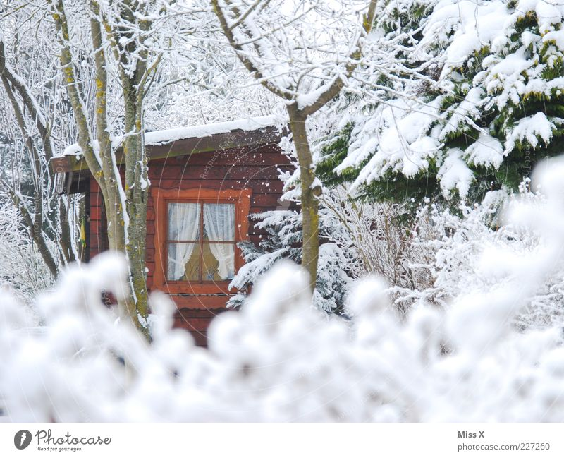 Hidden II Garden Nature Winter Weather Ice Frost Snow Tree Bushes Hut Window Cold White Moody Garden plot Wooden house Gardenhouse Enchanted forest Homey