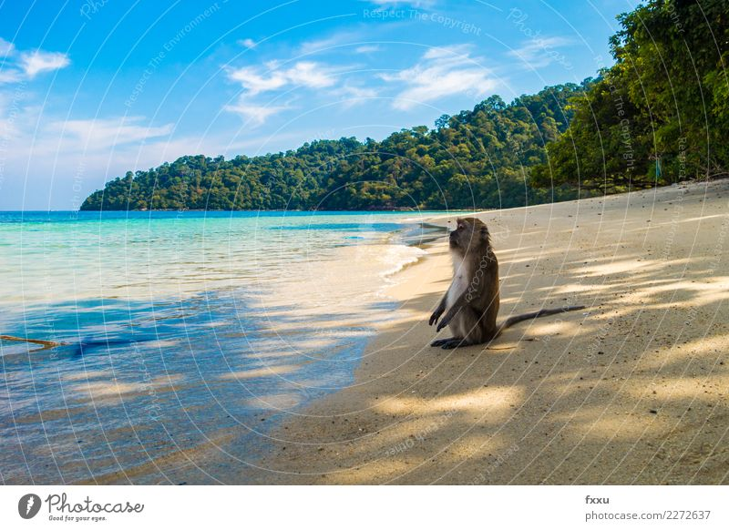 savour Beach Thailand Landscape Ocean Sun Sit To enjoy Sky Water Funny Monkeys Blue Nature Atlantic Ocean Island Rock Forest Tree Sand Relaxation Sunbathing