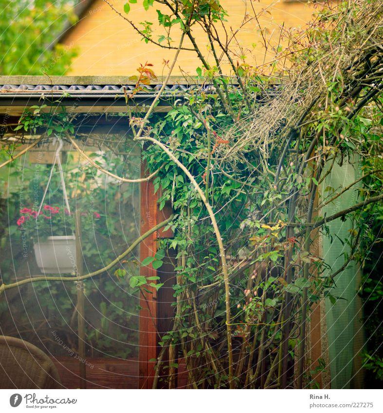 Green Plant Joy Summer Relaxation Garden Contentment Authentic Bushes Rose Romance Simple Idyll Joie de vivre (Vitality) Thorn Pane