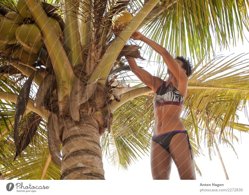 Coconut harvest Lifestyle Vacation & Travel Feminine Young woman Youth (Young adults) 1 Human being 18 - 30 years Adults Eroticism Palm tree Tree Coconut tree