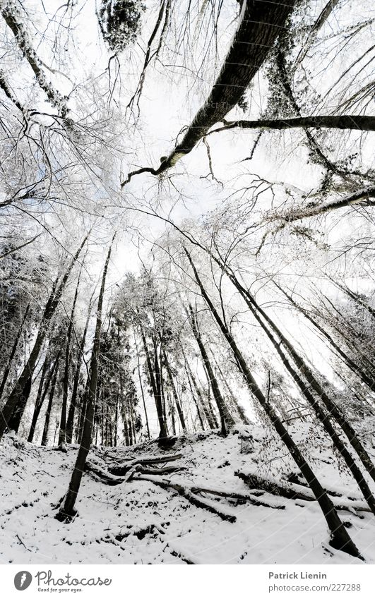 Bigger than us Environment Nature Landscape Elements Winter Weather Snow Plant Tree Forest Hill Exceptional Cold Black White Moody Black Forest Twig Giddy