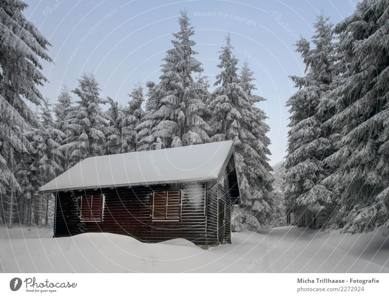 Cottage in the snow-covered forest Vacation & Travel Tourism Winter Snow Winter vacation Hiking House (Residential Structure) Winter sports Skiing Sledding