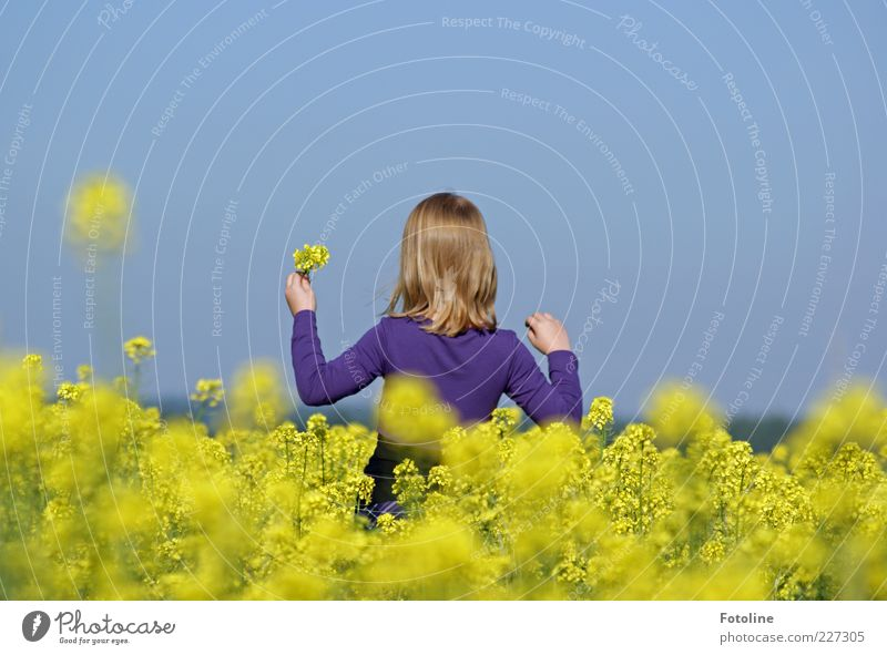 Nature Blue Girl Plant Summer Yellow Environment Blossom Bright Field Blonde Natural Violet Canola Pick Agricultural crop