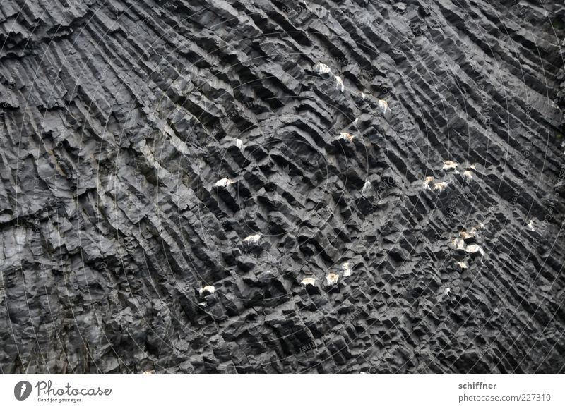 Nature Black Stone Rock Esthetic Elements Exceptional Sharp-edged Mountain Volcano Pattern Natural phenomenon Surface structure Wall of rock Volcanic