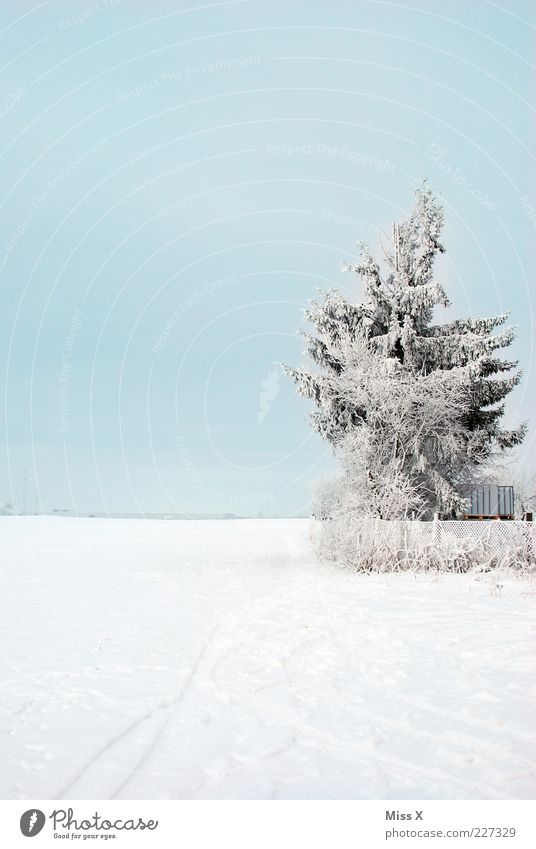Nature White Tree Cold Meadow Snow Weather Field Ice Frost Fence Fir tree Beautiful weather Snowscape Hoar frost Garden fence