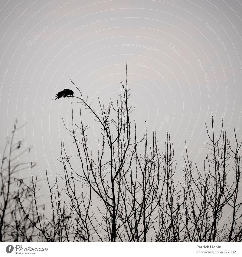 Nature Tree Plant Animal Black Dark Environment Gray Air Moody Bird Sit Wild animal Exceptional Branch Creepy