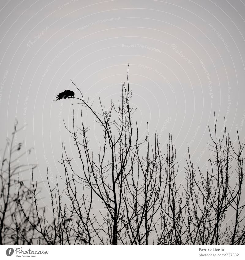 Nature Tree Plant Animal Black Dark Environment Gray Air Moody Bird Sit Wild animal Exceptional Branch Creepy