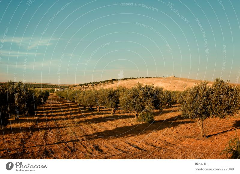 Blue Summer Yellow Autumn Landscape Brown Earth Travel photography Hill Agriculture Tree Forestry Agricultural crop Tunisia Olive tree