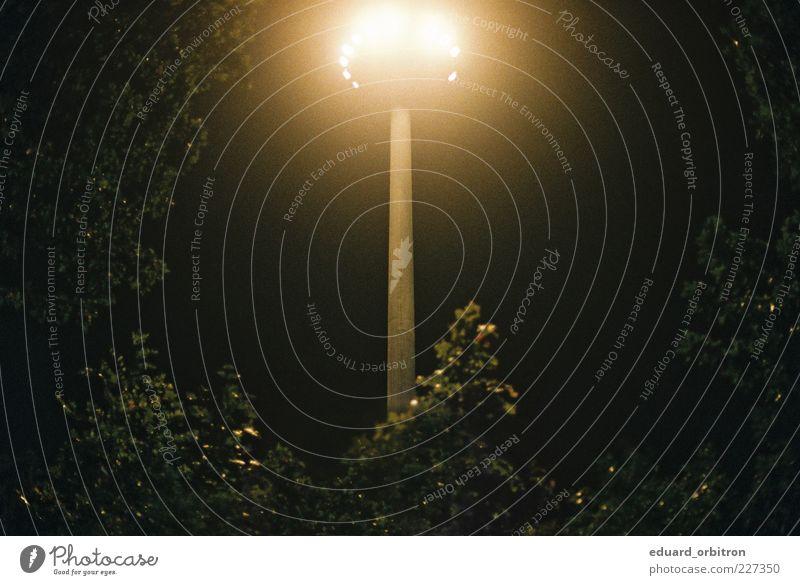 Tree Dark Lighting Bushes Exceptional Lantern Dazzle UFO Majestic UFO lamp