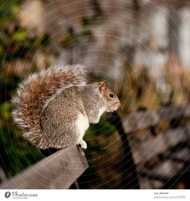 Nature Beautiful Calm Animal Sit Tails Squirrel Crouching