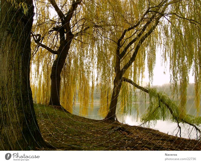Abandoned Park II Tree Autumn Lake Sea park Deserted Yellow Brown Loneliness Water Nature