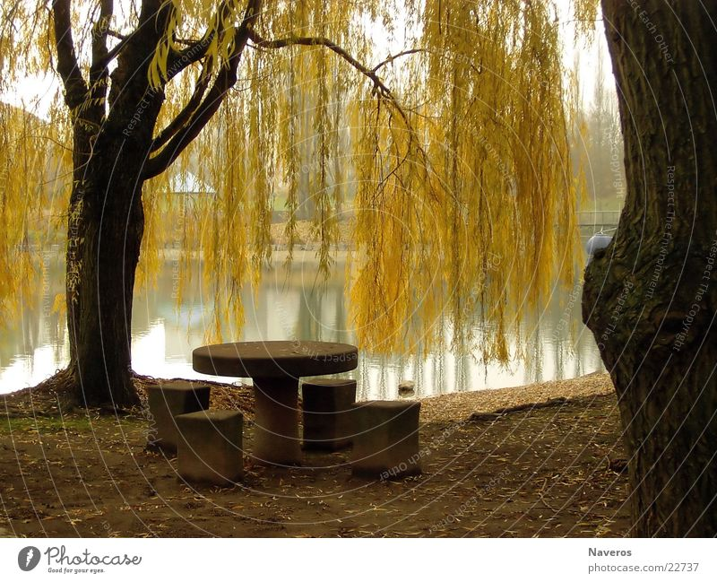 Abandoned Park I Table Tree Autumn Lake Sea park Deserted Yellow Brown Loneliness Water Nature