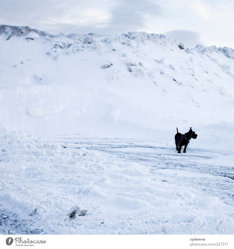 Black < White Adventure Freedom Environment Nature Landscape Sky Winter Climate Ice Frost Snow Mountain Dog Esthetic Loneliness Uniqueness End Curiosity Calm